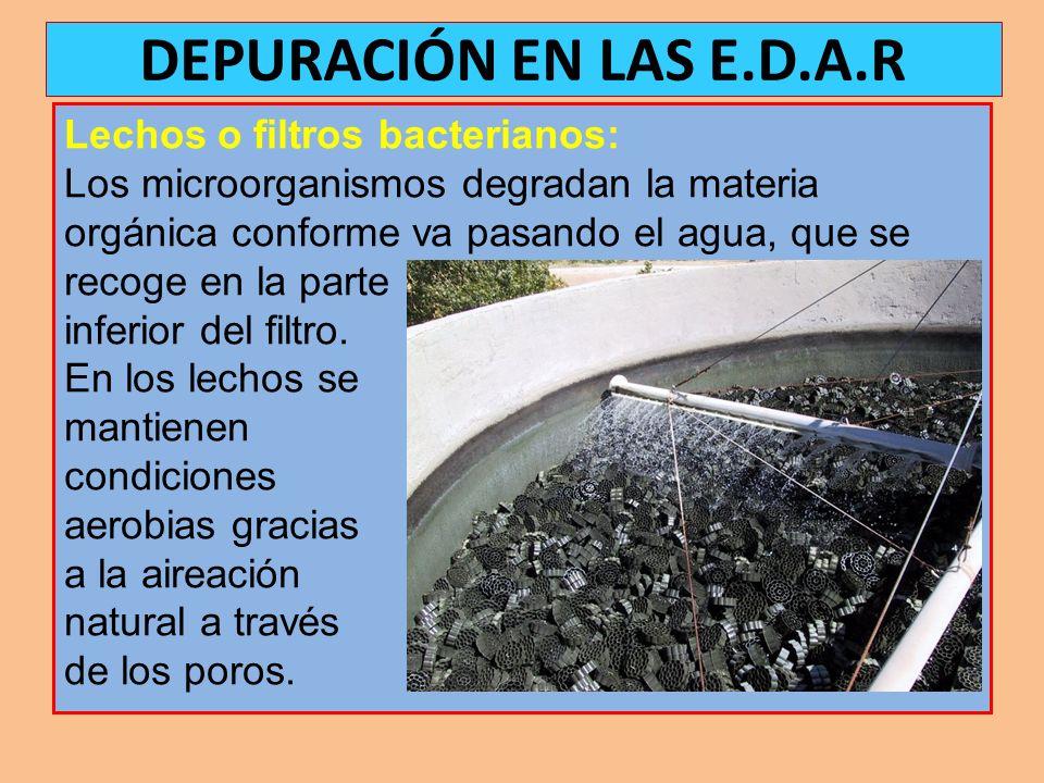 DEPURACIÓN EN LAS E.D.A.R Lechos o filtros bacterianos: