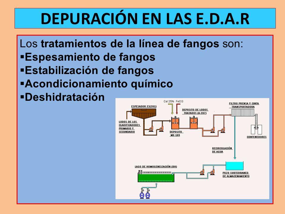 DEPURACIÓN EN LAS E.D.A.R Los tratamientos de la línea de fangos son: