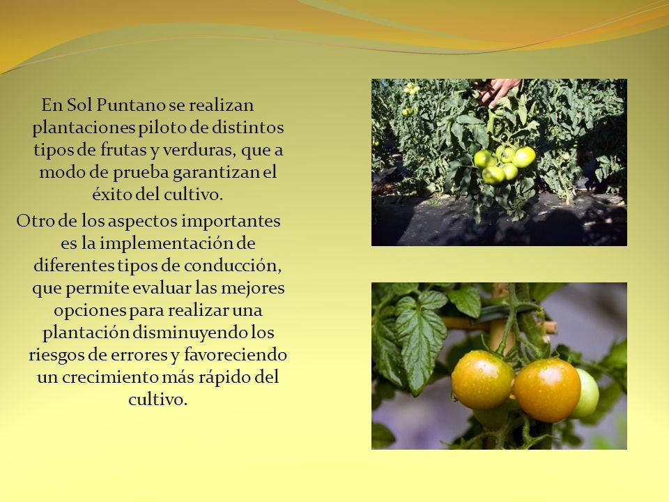En Sol Puntano se realizan plantaciones piloto de distintos tipos de frutas y verduras, que a modo de prueba garantizan el éxito del cultivo.
