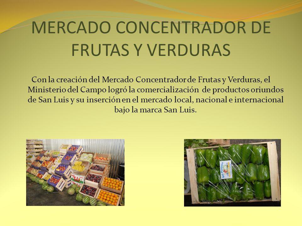 MERCADO CONCENTRADOR DE FRUTAS Y VERDURAS
