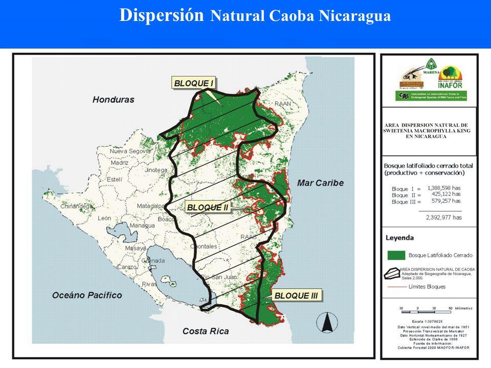Dispersión Natural Caoba Nicaragua