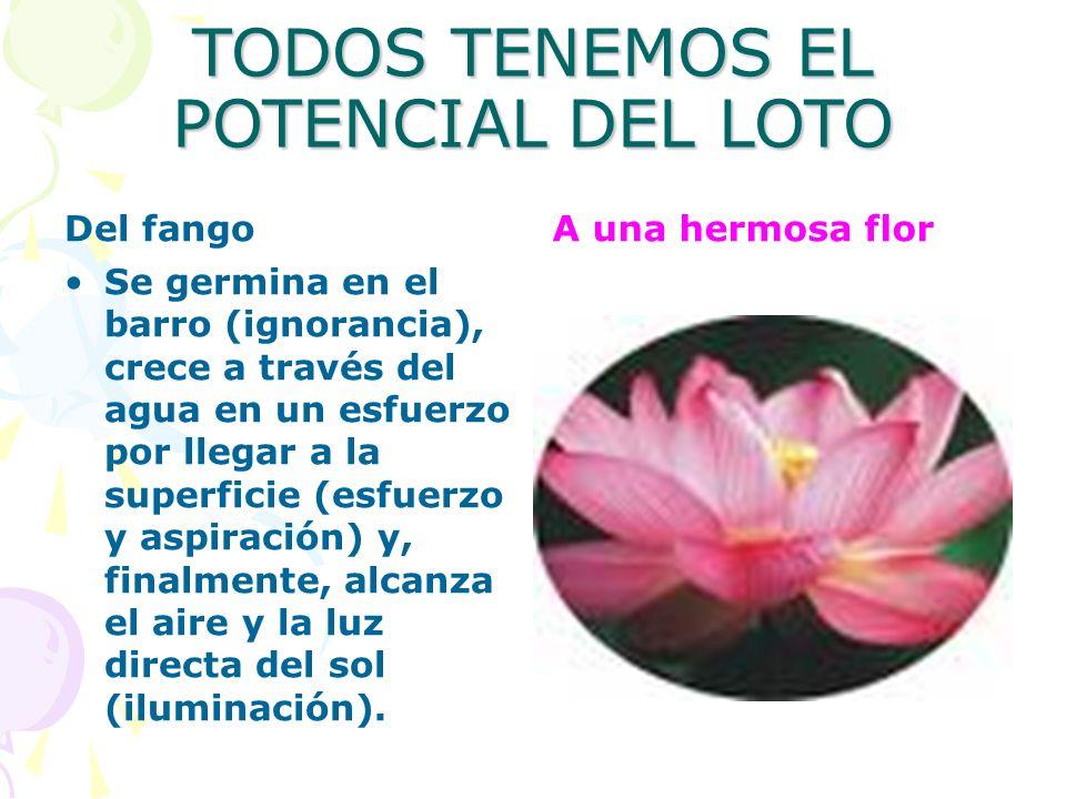 TODOS TENEMOS EL POTENCIAL DEL LOTO