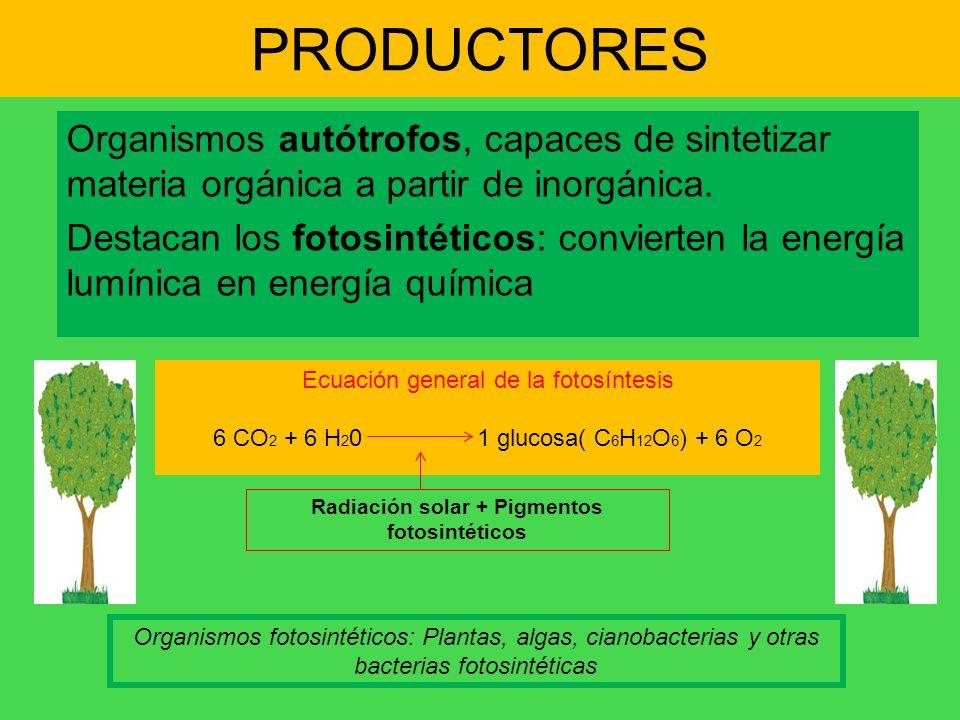 Radiación solar + Pigmentos fotosintéticos