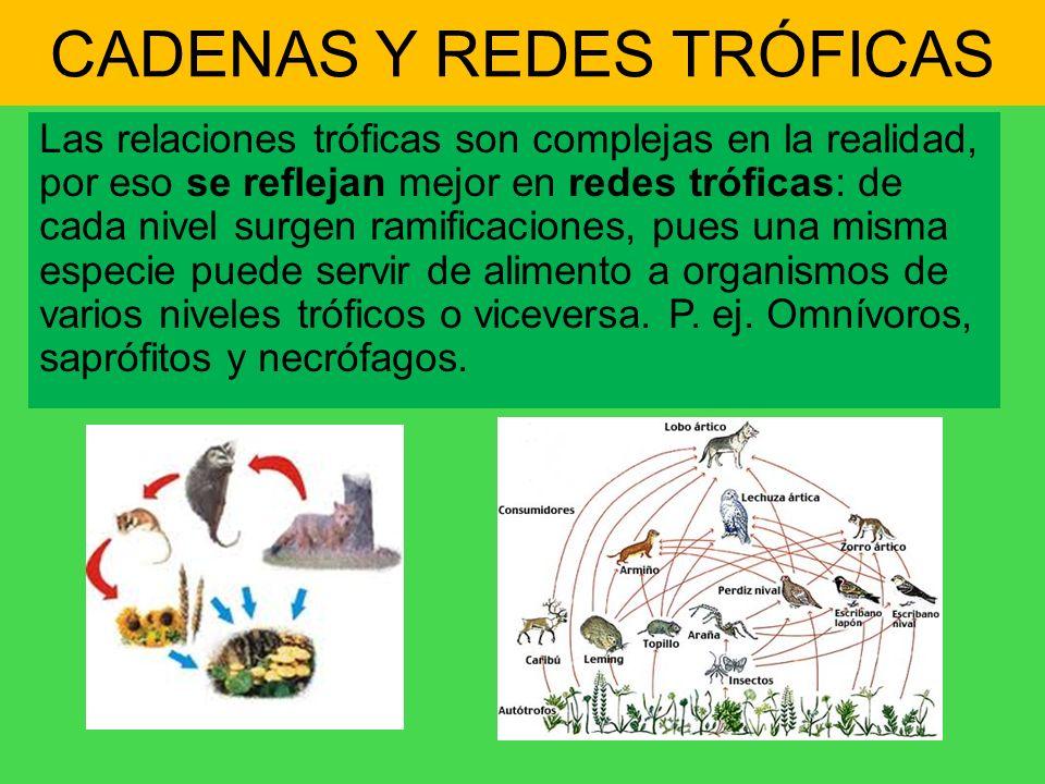 CADENAS Y REDES TRÓFICAS