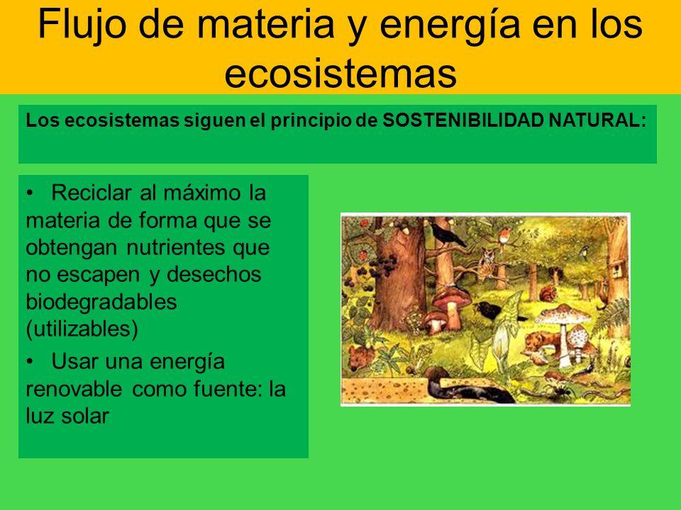 Flujo de materia y energía en los ecosistemas