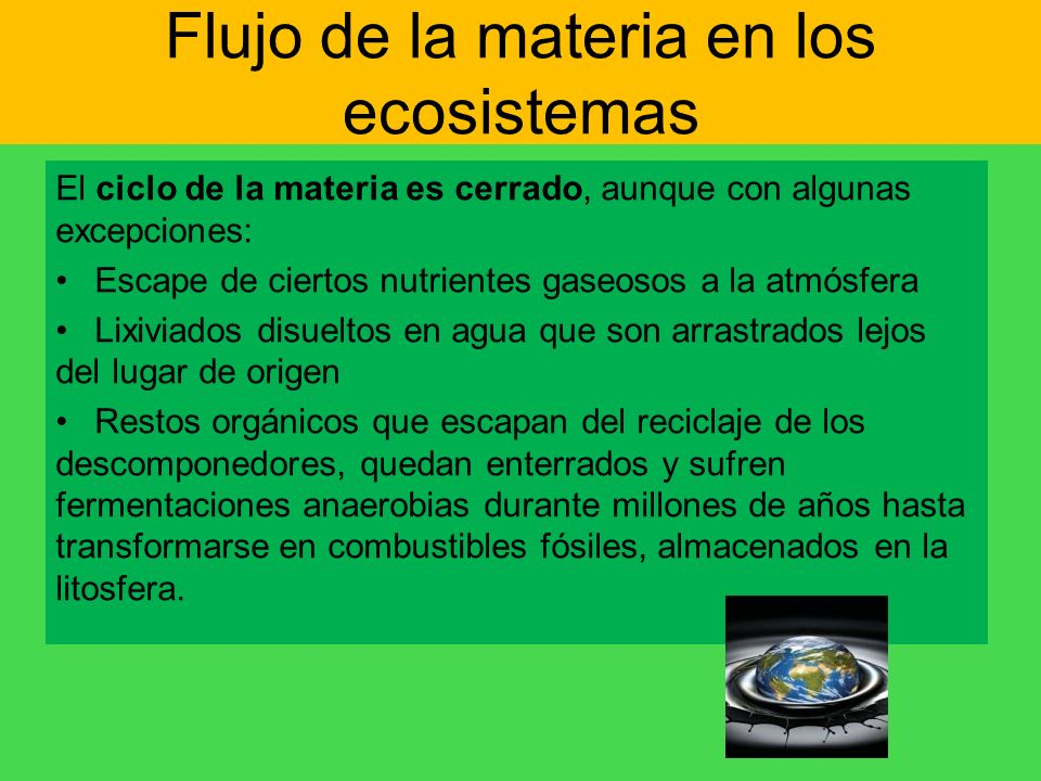 Flujo de la materia en los ecosistemas