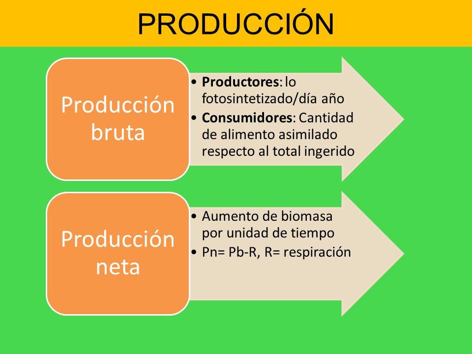 PRODUCCIÓN Producción bruta Productores: lo fotosintetizado/día año