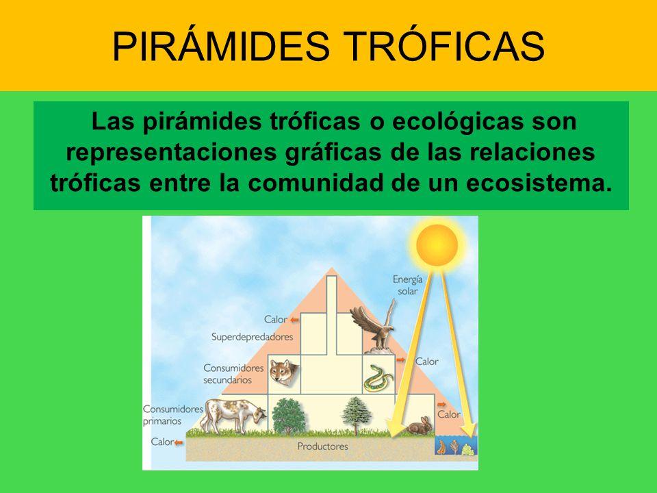 PIRÁMIDES TRÓFICASLas pirámides tróficas o ecológicas son representaciones gráficas de las relaciones tróficas entre la comunidad de un ecosistema.