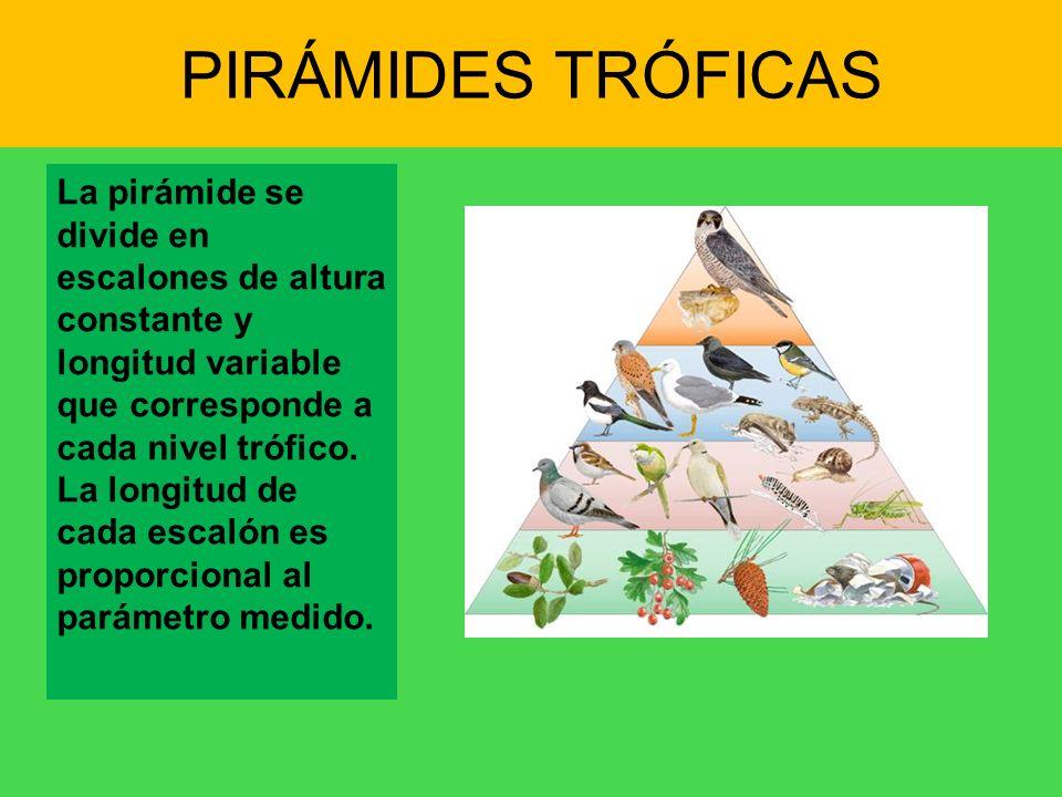 PIRÁMIDES TRÓFICAS