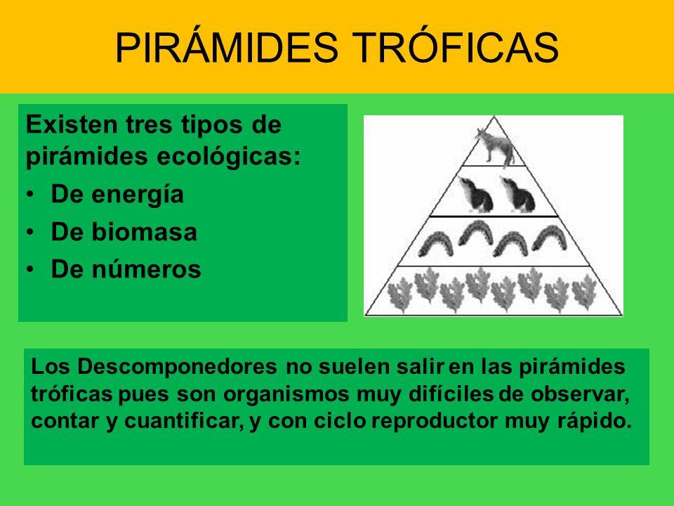 PIRÁMIDES TRÓFICAS Existen tres tipos de pirámides ecológicas: