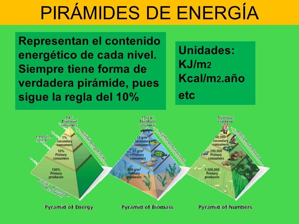 PIRÁMIDES DE ENERGÍA Representan el contenido energético de cada nivel. Siempre tiene forma de verdadera pirámide, pues sigue la regla del 10%