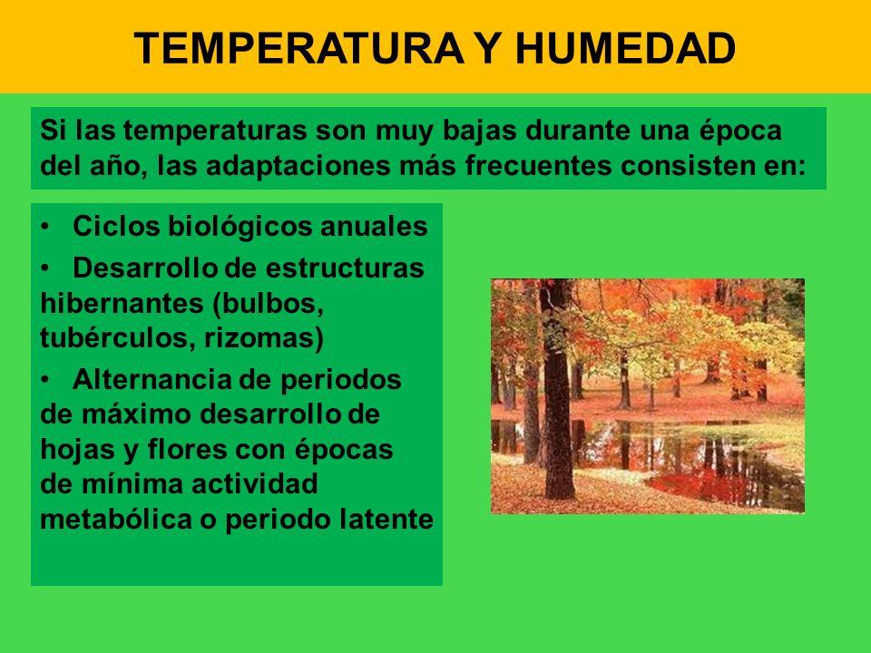 TEMPERATURA Y HUMEDAD Si las temperaturas son muy bajas durante una época del año, las adaptaciones más frecuentes consisten en: