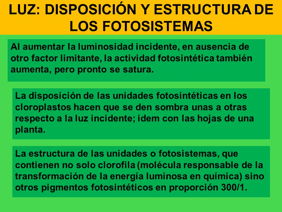 LUZ: DISPOSICIÓN Y ESTRUCTURA DE LOS FOTOSISTEMAS
