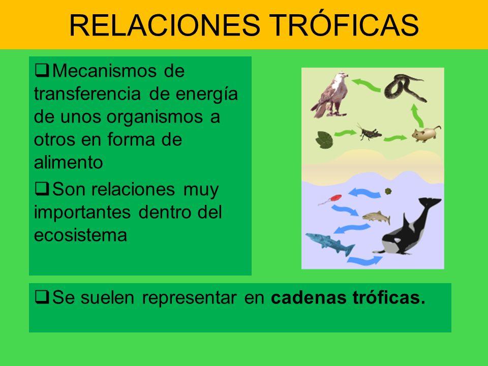 RELACIONES TRÓFICAS Mecanismos de transferencia de energía de unos organismos a otros en forma de alimento.