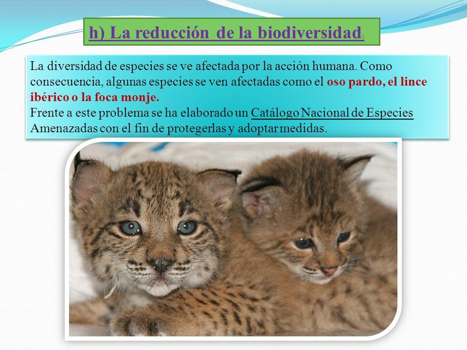 h) La reducción de la biodiversidad: