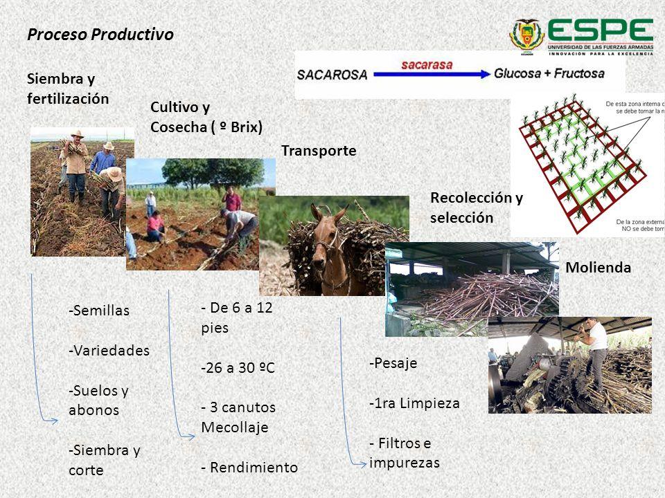 Proceso Productivo Siembra y fertilización Cultivo y Cosecha ( º Brix)