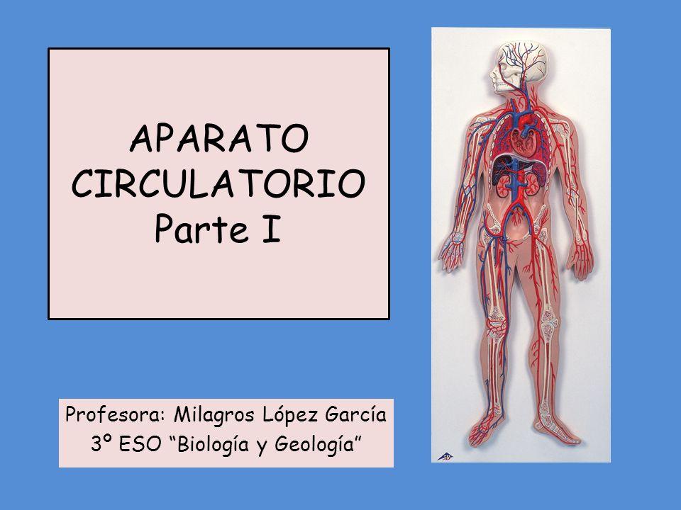 APARATO CIRCULATORIO Parte I