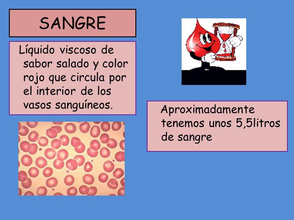 SANGRE Líquido viscoso de sabor salado y color rojo que circula por el interior de los vasos sanguíneos.