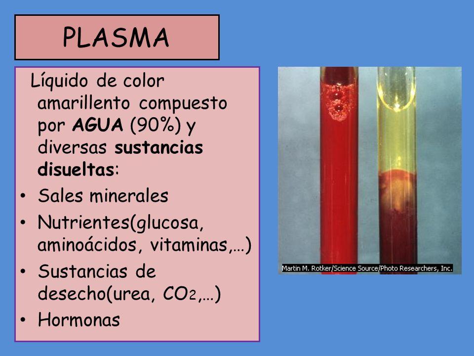 PLASMA Líquido de color amarillento compuesto por AGUA (90%) y diversas sustancias disueltas: Sales minerales.