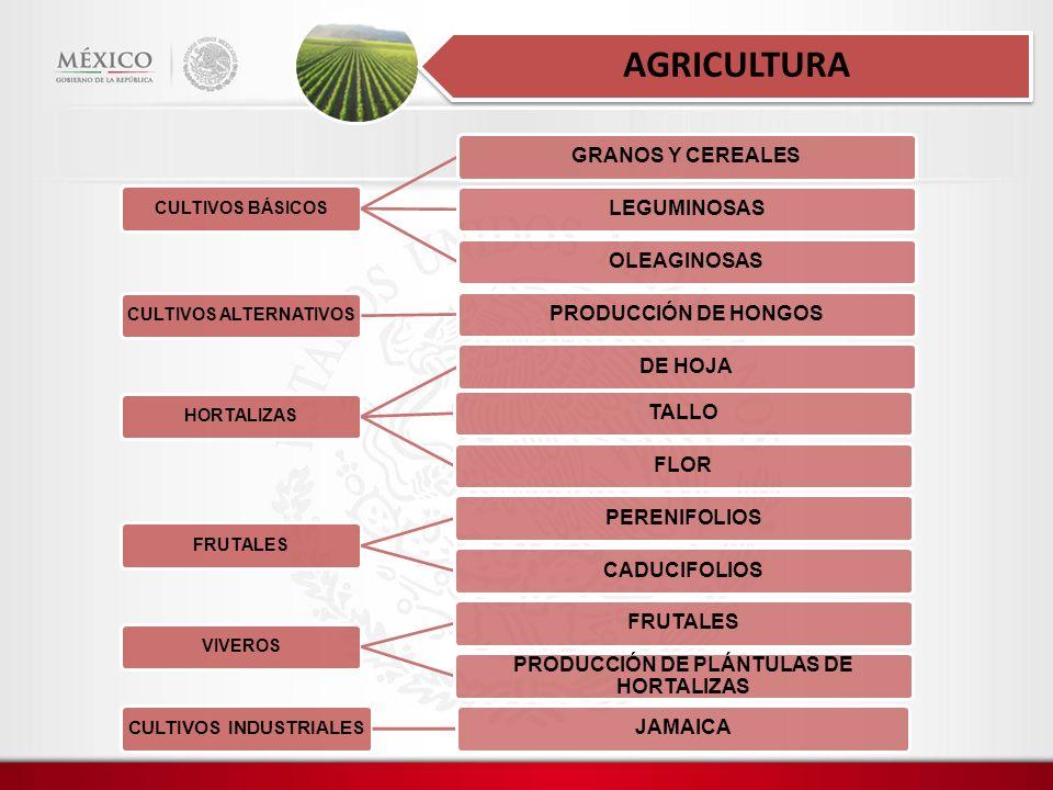 AGRICULTURA GRANOS Y CEREALES LEGUMINOSAS OLEAGINOSAS