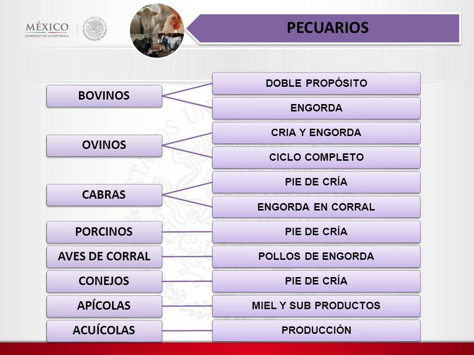 PECUARIOS BOVINOS OVINOS CABRAS PORCINOS AVES DE CORRAL CONEJOS