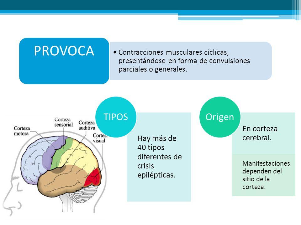 PROVOCA Hay más de 40 tipos diferentes de crisis epilépticas.