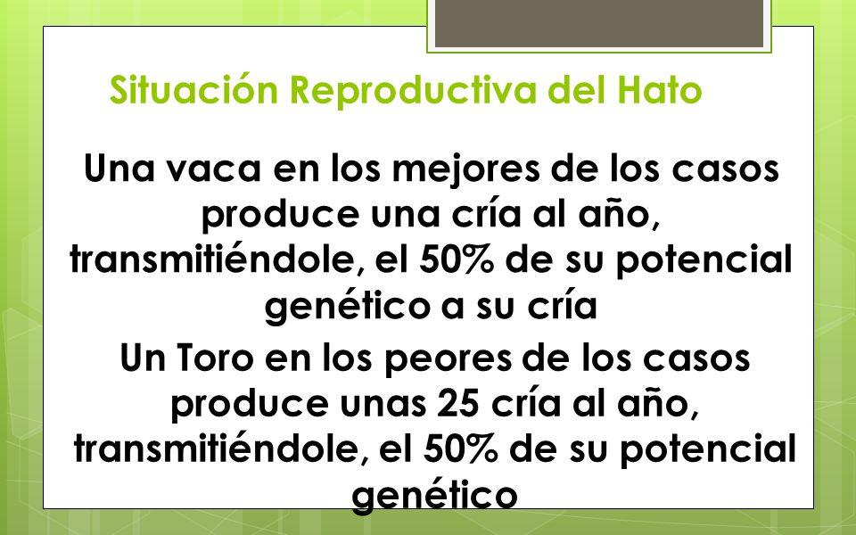 Situación Reproductiva del Hato