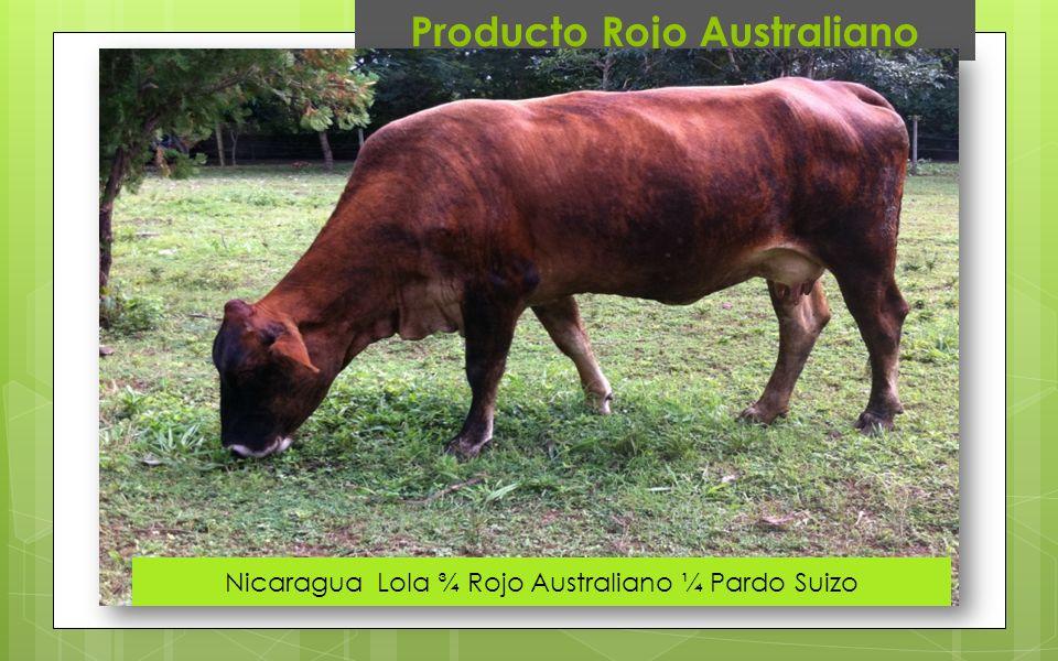 Producto Rojo Australiano