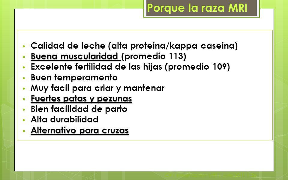 Porque la raza MRI Calidad de leche (alta proteina/kappa caseina)