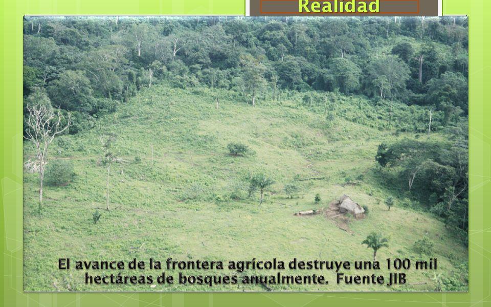 Realidad El avance de la frontera agrícola destruye una 100 mil hectáreas de bosques anualmente.