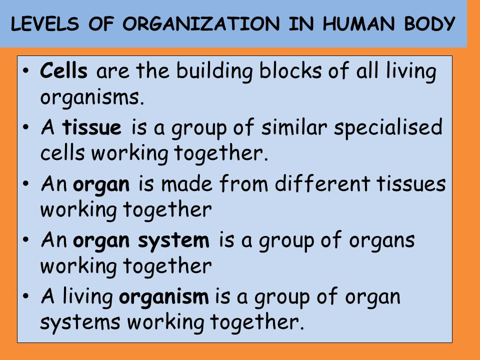LEVELS OF ORGANIZATION IN HUMAN BODY
