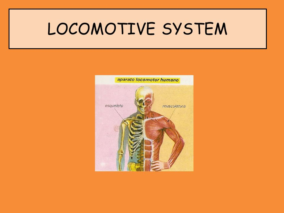 LOCOMOTIVE SYSTEM