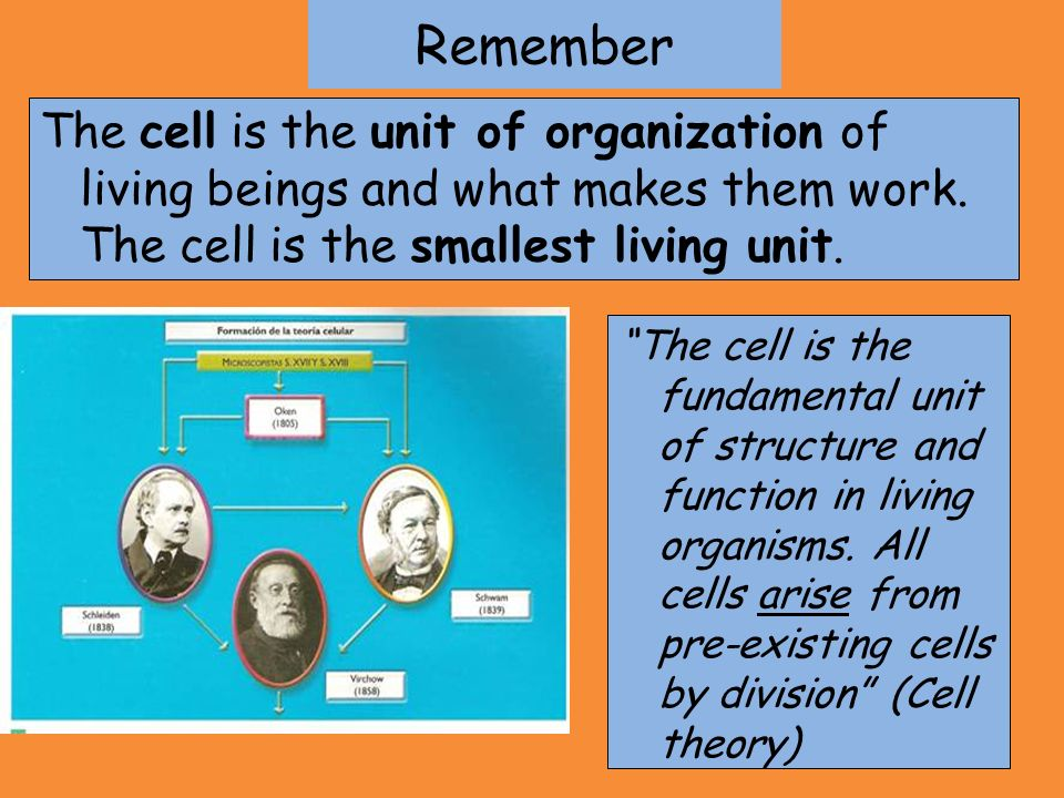 Remember The cell is the unit of organization of living beings and what makes them work. The cell is the smallest living unit.