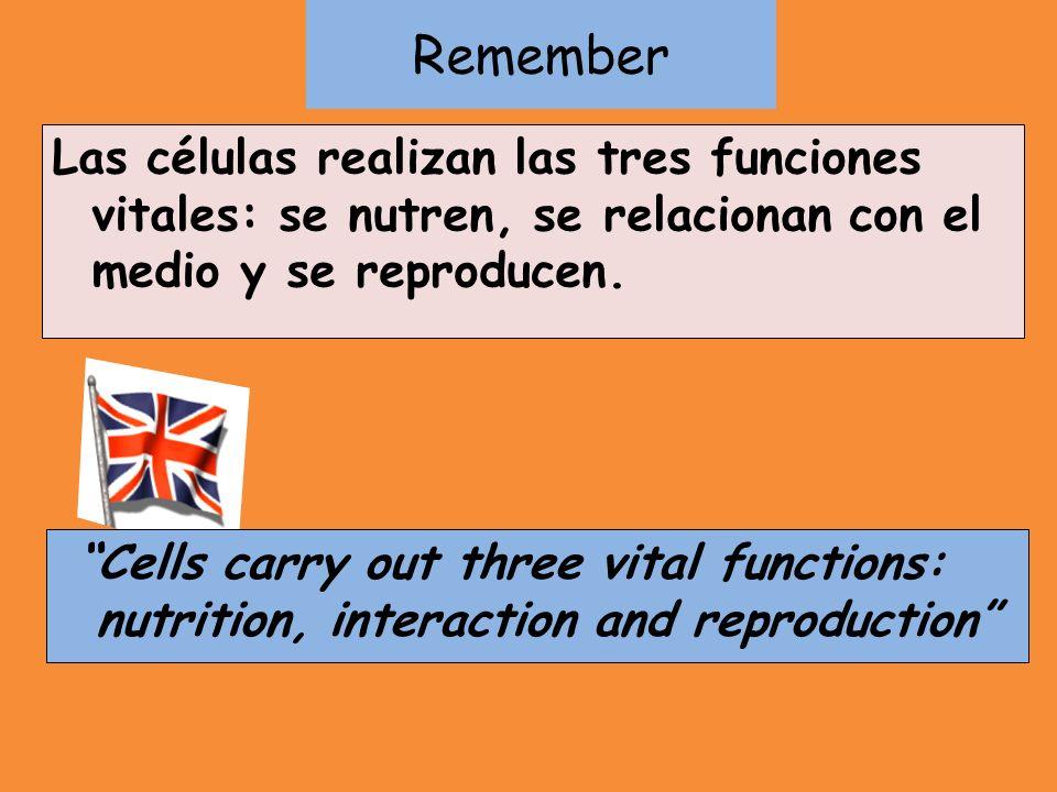 Remember Las células realizan las tres funciones vitales: se nutren, se relacionan con el medio y se reproducen.