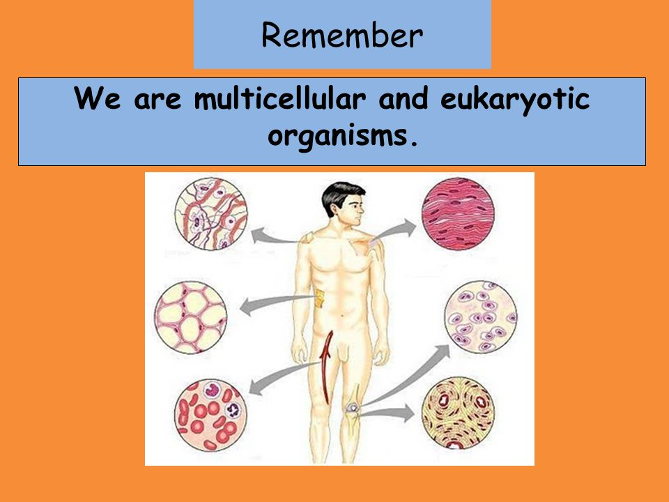 We are multicellular and eukaryotic organisms.