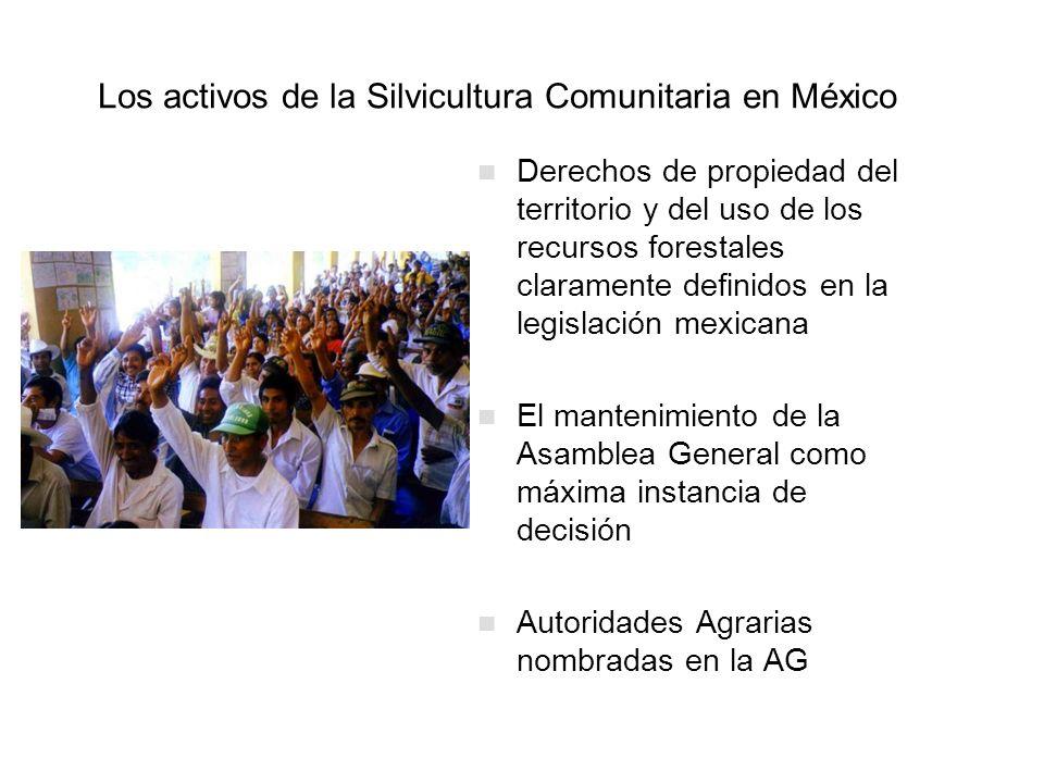 Los activos de la Silvicultura Comunitaria en México