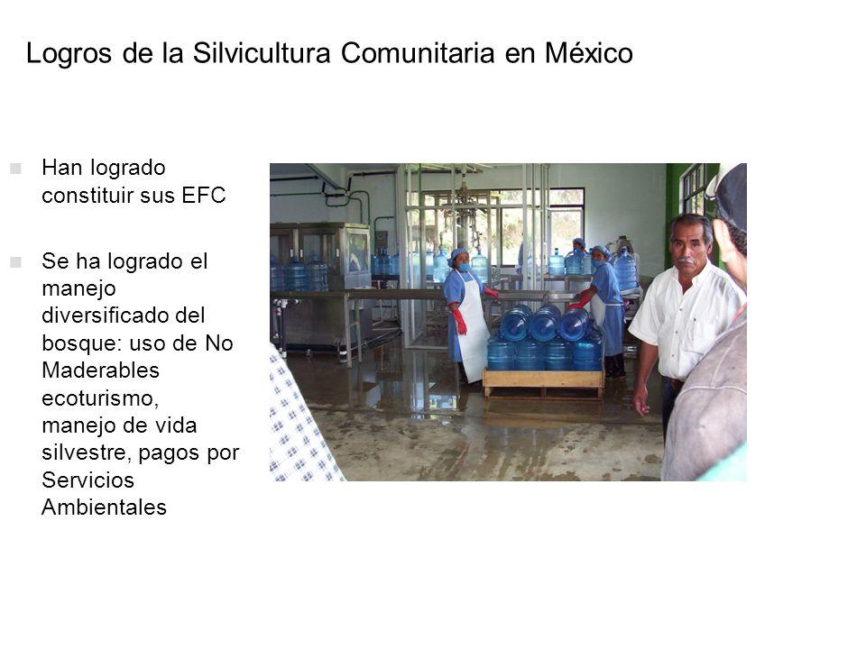 Logros de la Silvicultura Comunitaria en México