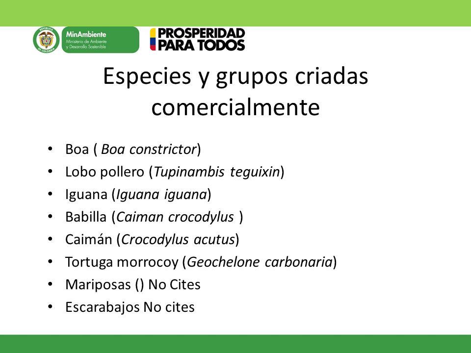 Especies y grupos criadas comercialmente