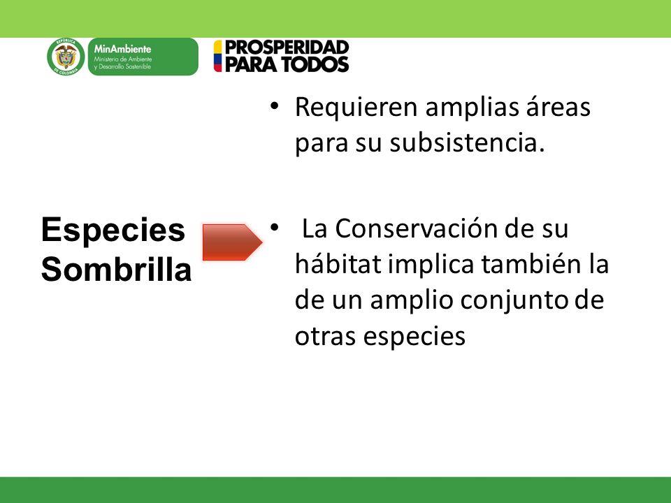 Especies Sombrilla Requieren amplias áreas para su subsistencia.