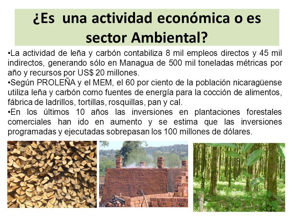 ¿Es una actividad económica o es sector Ambiental