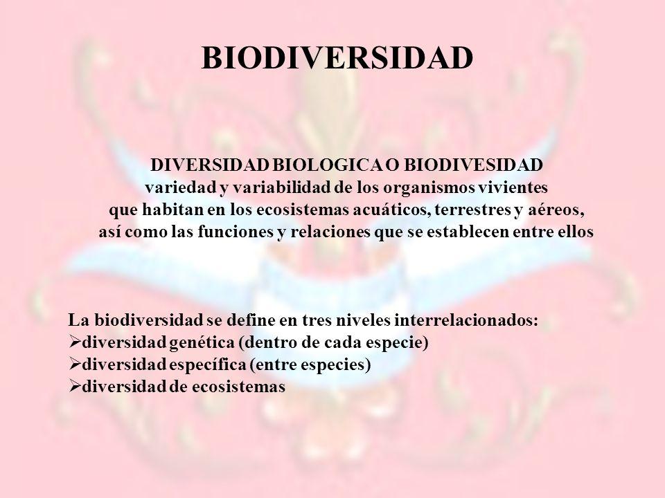 BIODIVERSIDAD DIVERSIDAD BIOLOGICA O BIODIVESIDAD