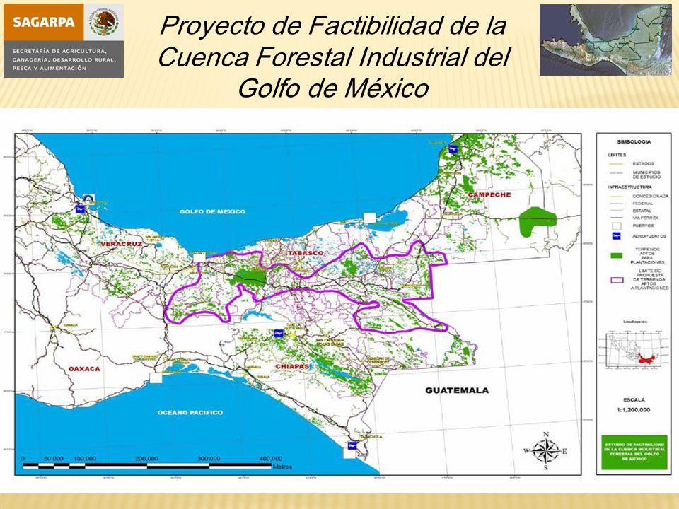 Proyecto de Factibilidad de la Cuenca Forestal Industrial del Golfo de México