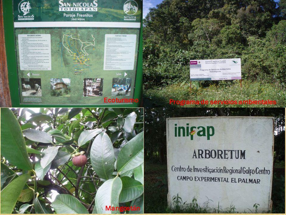 Ecoturismo Programa de servicios ambientales Mangostán