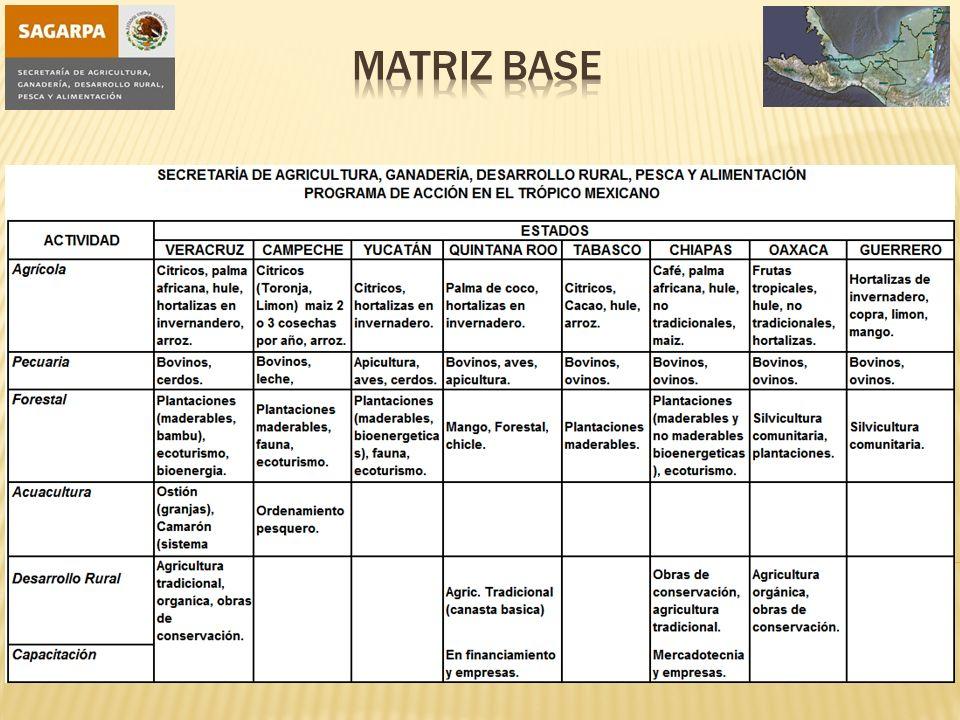 Matriz base