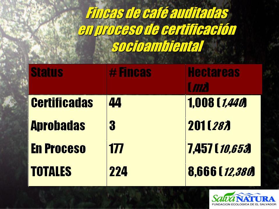Fincas de café auditadas en proceso de certificación socioambiental
