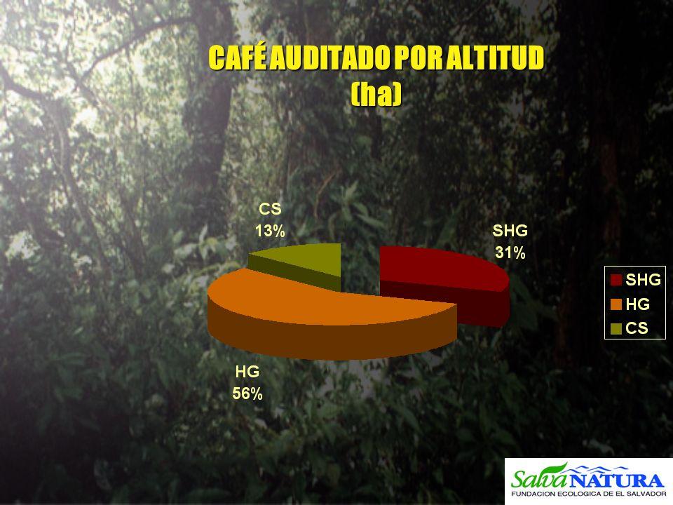 CAFÉ AUDITADO POR ALTITUD (ha)