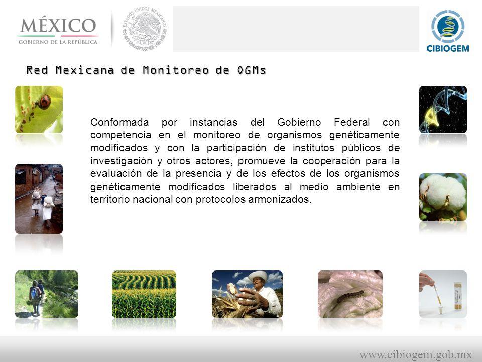 Red Mexicana de Monitoreo de OGMs