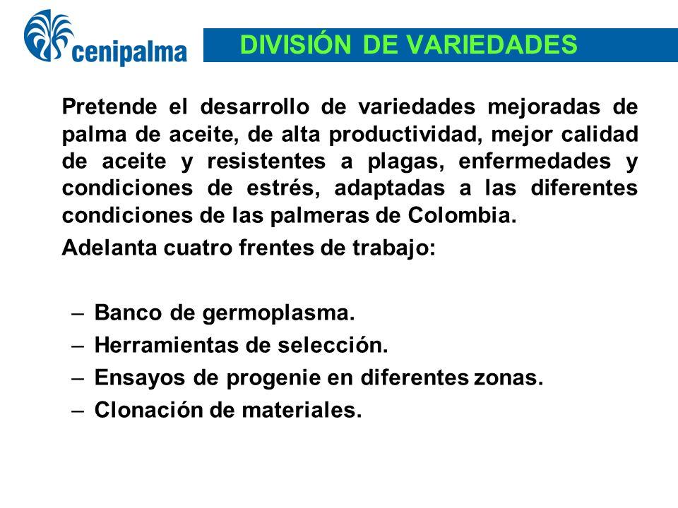 DIVISIÓN DE VARIEDADES