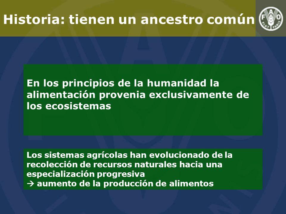 Historia: tienen un ancestro común