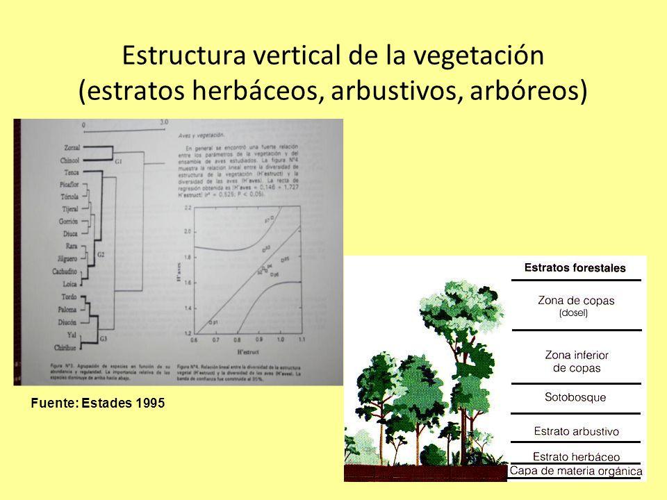 Estructura vertical de la vegetación (estratos herbáceos, arbustivos, arbóreos)